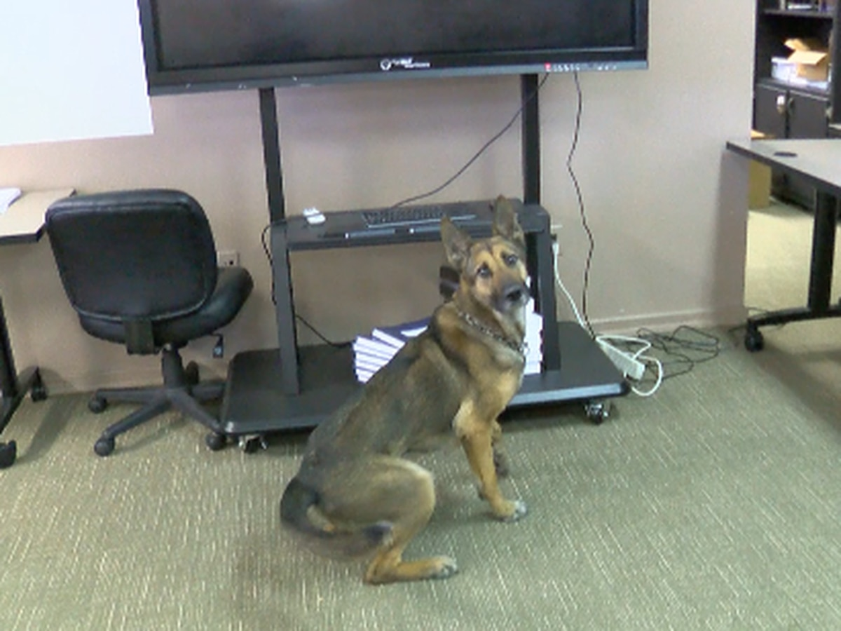 Fire Marshal k-9 is top dog in accelerant detection