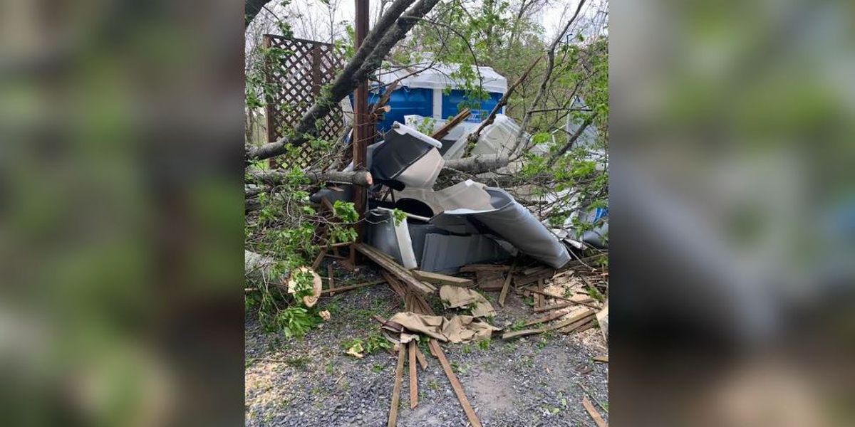 Man trapped inside portable toilet after tree falls at Pa. national park
