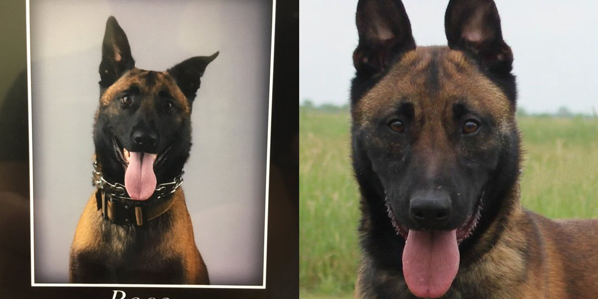 Service to mark end of watch for sheriff's K-9 Boco