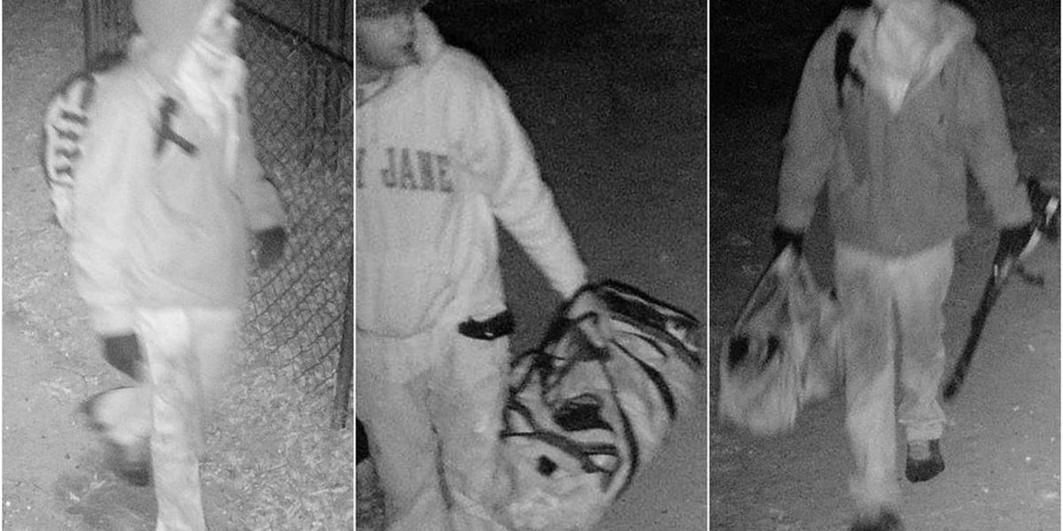ETX investigators ask for help identifying suspected burglars