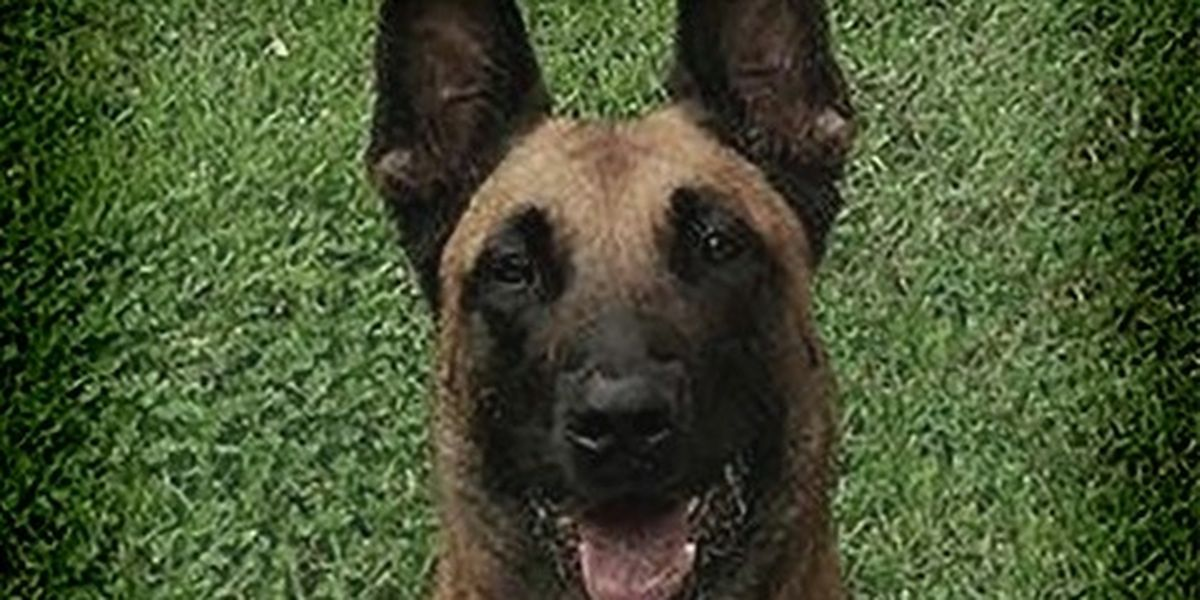 DeSoto Parish sheriff mourns loss of retired K9 'Kyra'