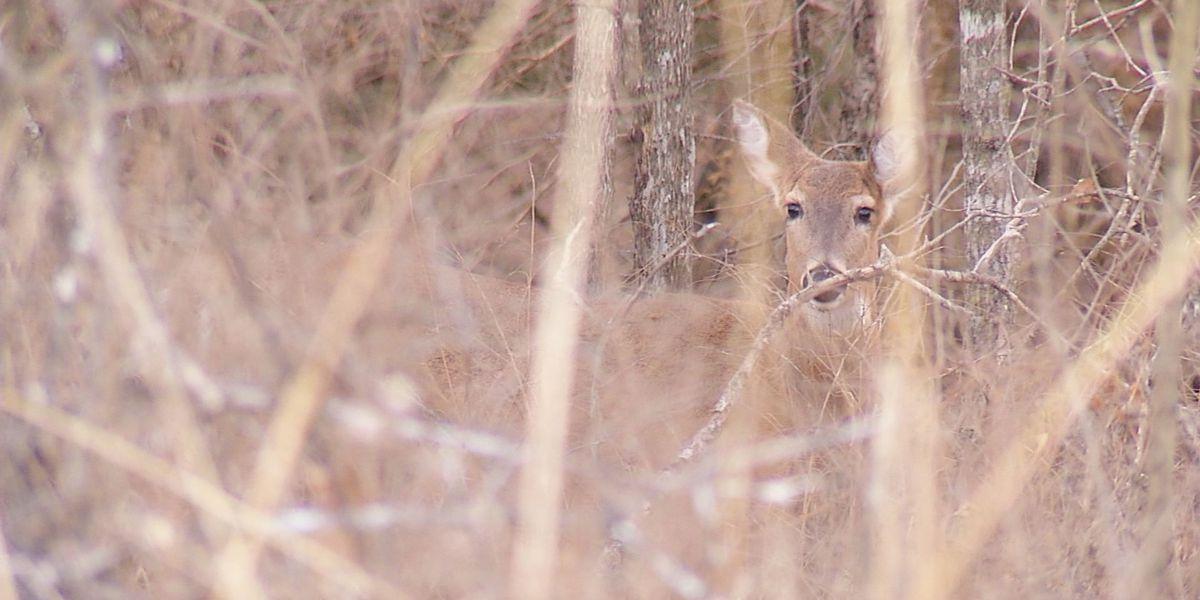 Hunter dies after deer attacks him