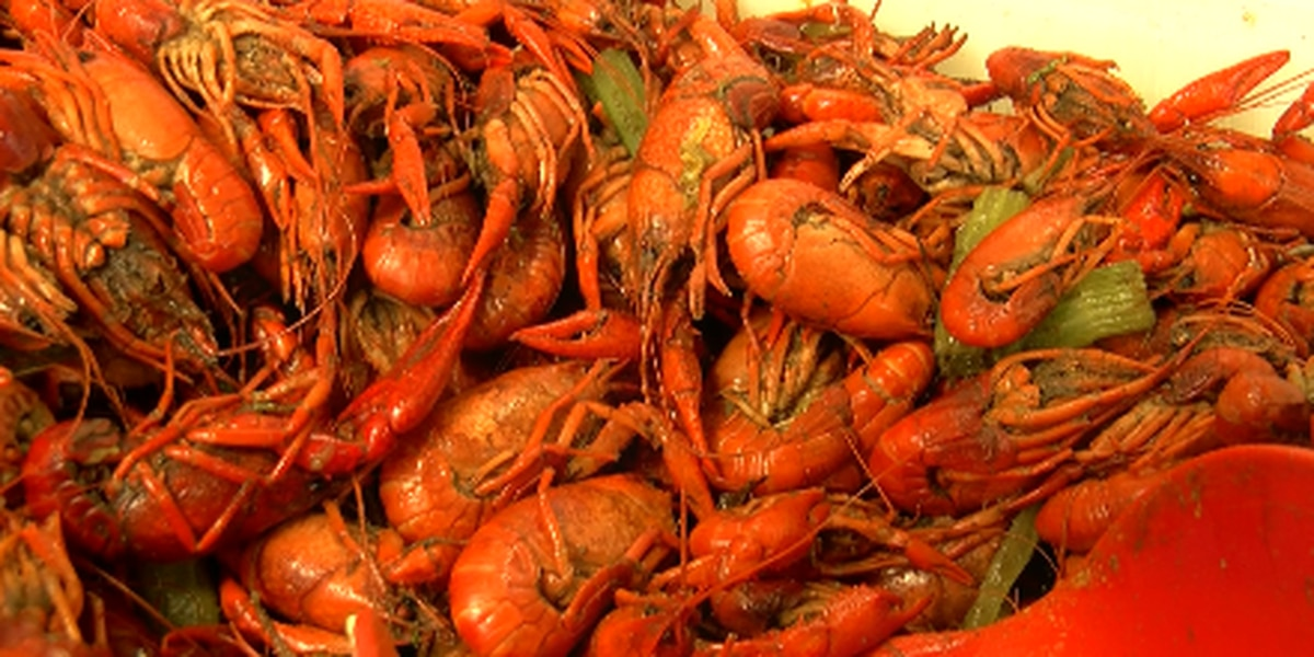 Crawfish prices drop to lowest they've been this season