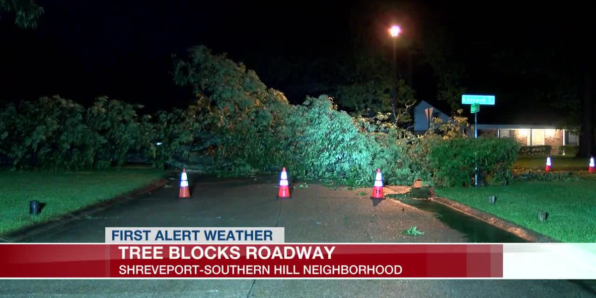 Tree down in Southern Hills