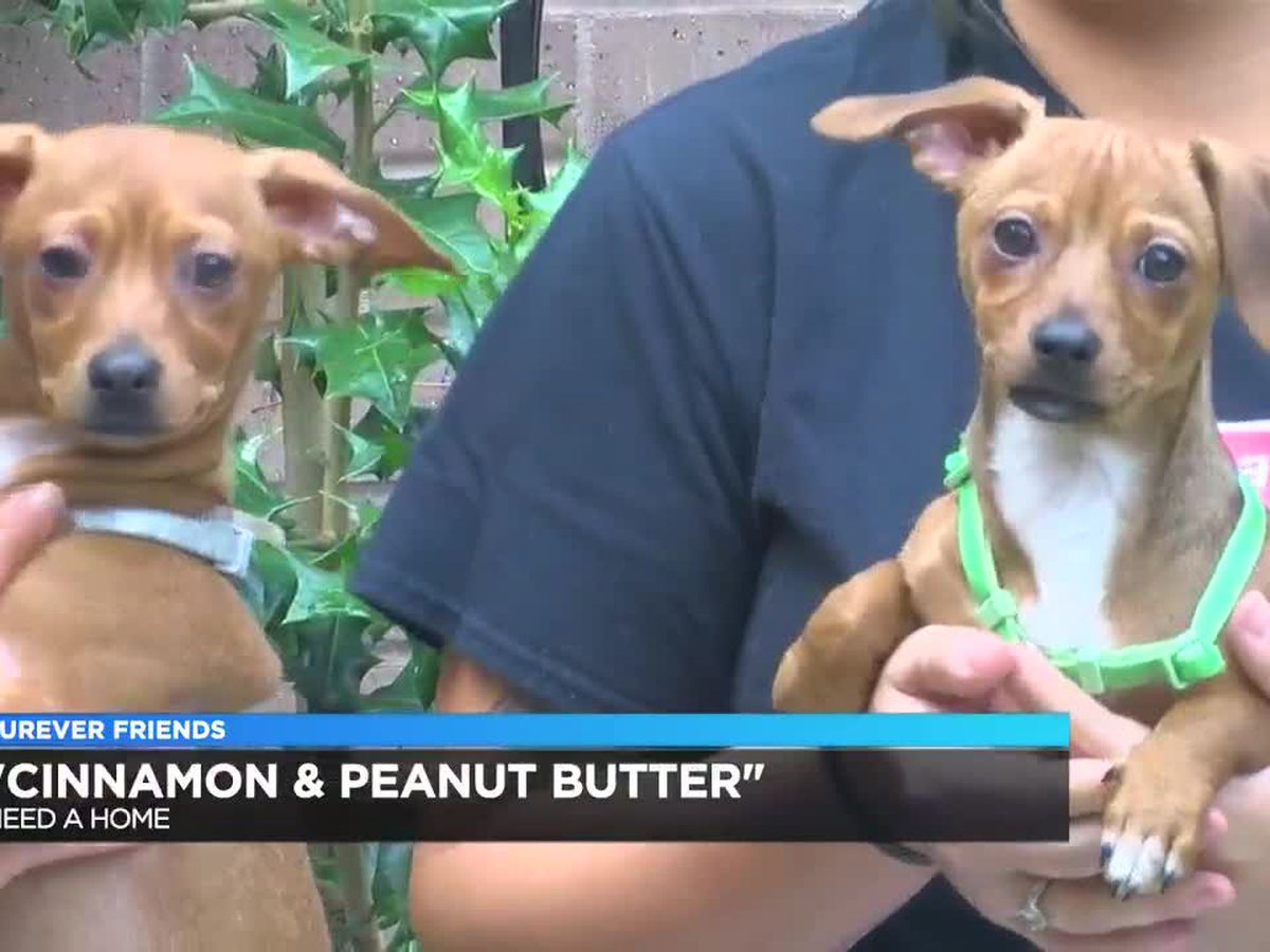 Furever Friends - Cinnamon & Peanut Butter