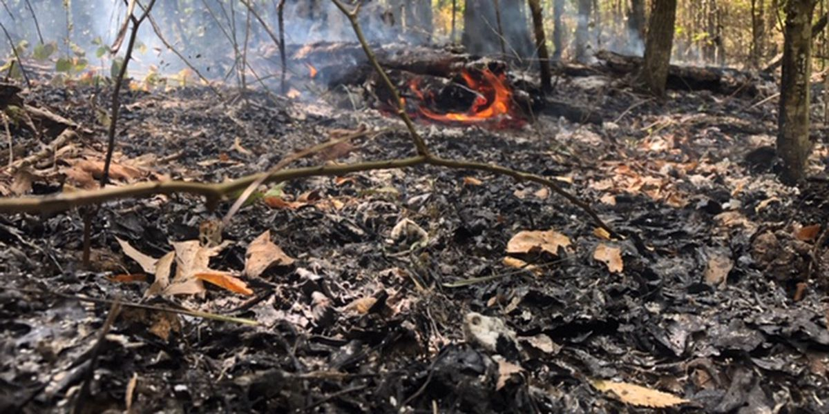 Hot, dry summer sets stage for increased wildfire threat