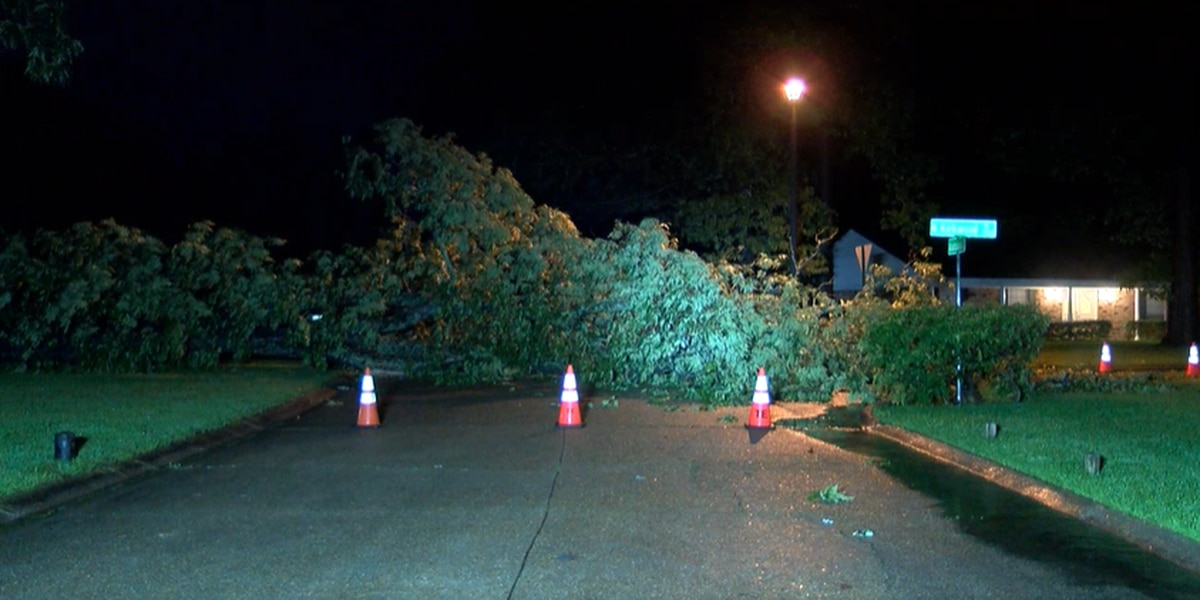 Tree blocks intersection in Southern Hills neighborhood