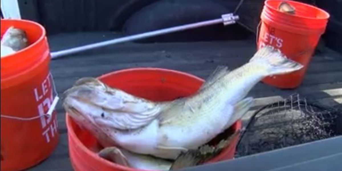 Officials collect dozens of dead bass from Cross Lake