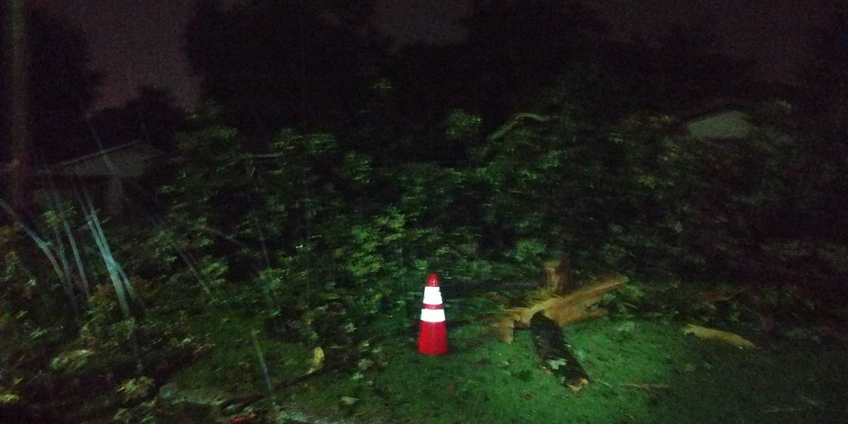 Tree falls on Shreveport home; no injuries
