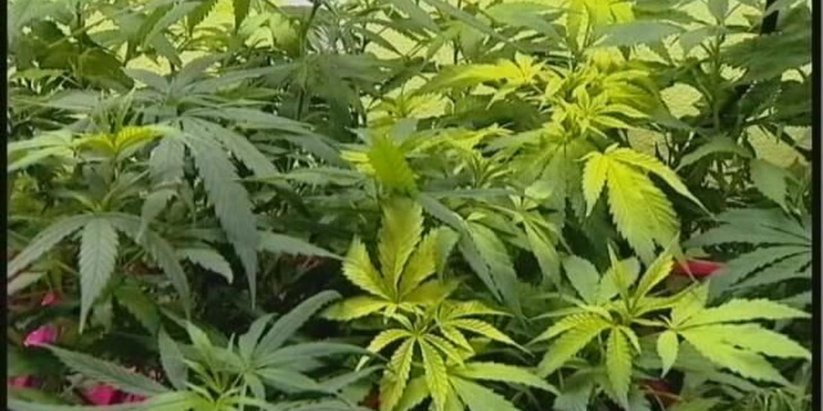 Texarkana board approves two medical marijuana regulations