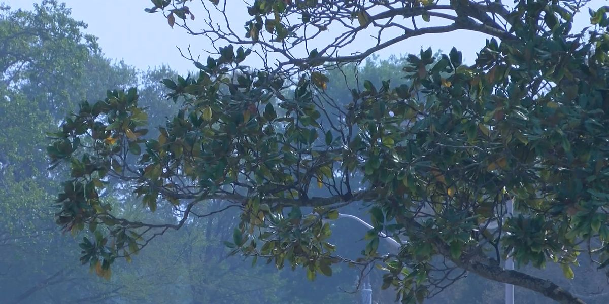 Mysterious smell lingers across Northwest Louisiana
