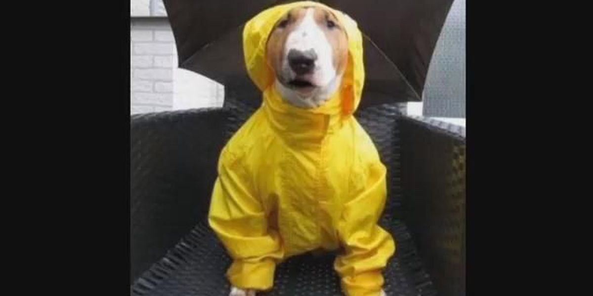 Mr. Kippers again steps up to help four-legged storm victims