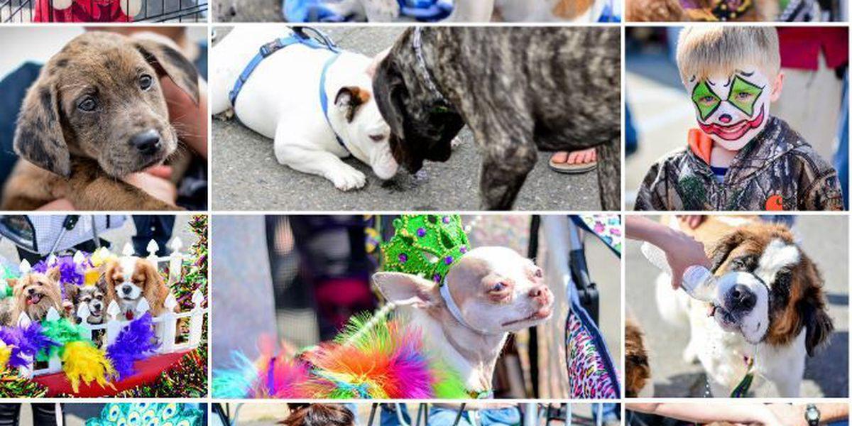 Krewe of Barkus & Meoux holds annual Mardi Gras pet parade