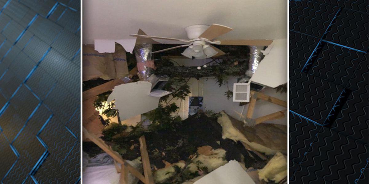 Tree crashes into SC boy's bedroom during Hurricane Dorian