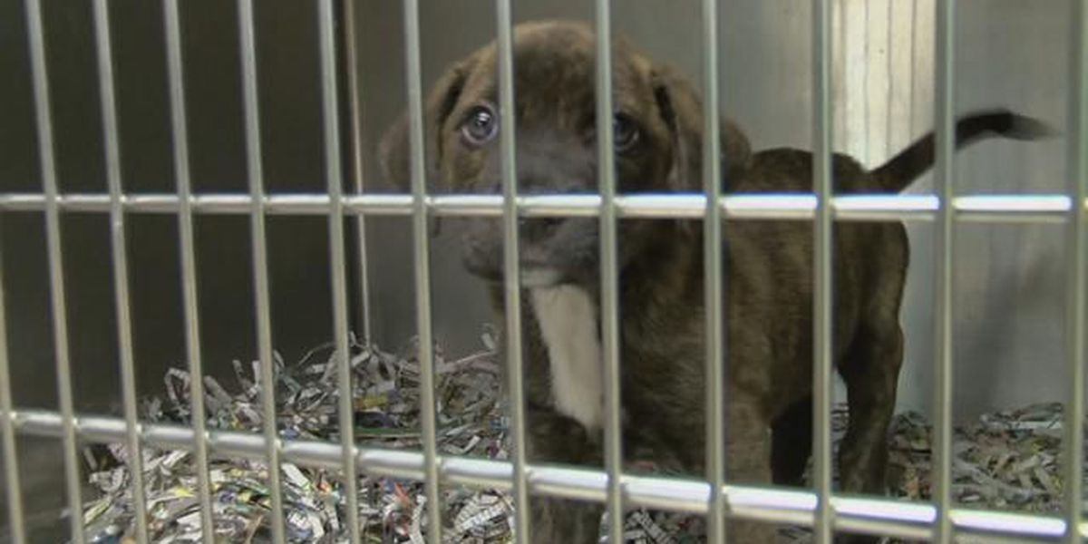 Caddo to begin searching for new animal services director