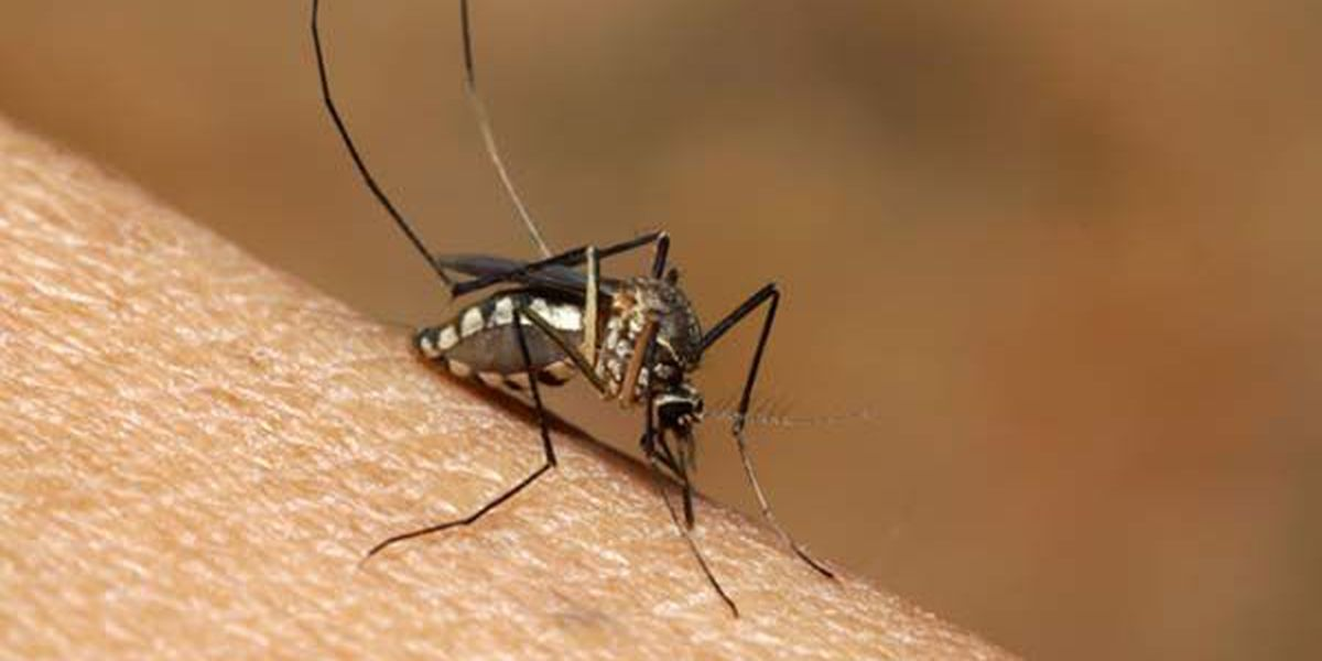 UPDATE: 4 new cases of West Nile Virus reported in NWLA