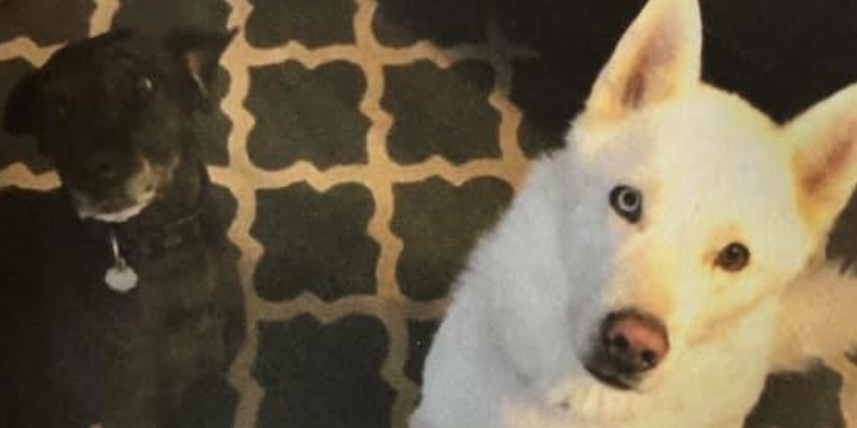 Family searching for missing dogs, reward offered