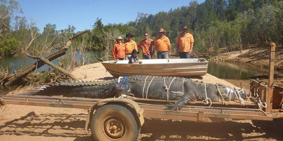 Monster 15-foot crocodile caught after eight-year hunt
