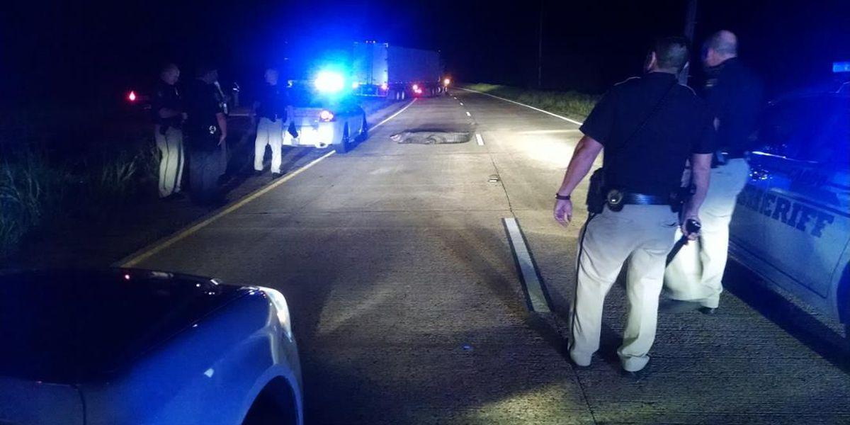 Injured alligator causes traffic hazard on Hwy. 1