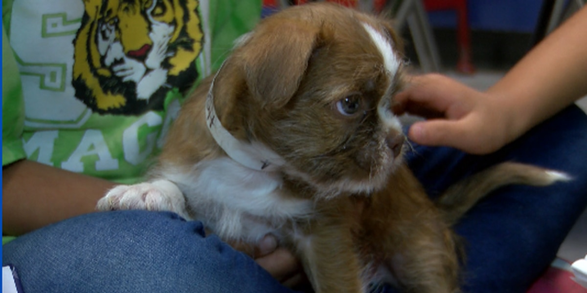 Second-graders use puppies to teach reading, math
