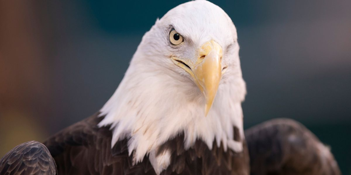 Louisiana teen accused of killing bald eagle, hawk
