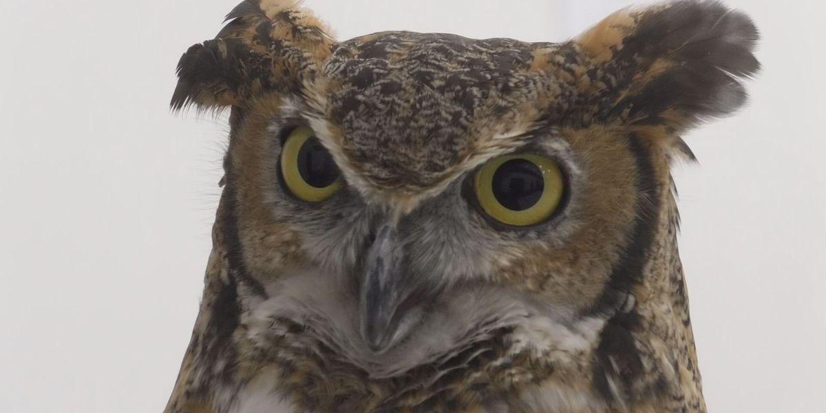 Owl Night returns on Feb. 15