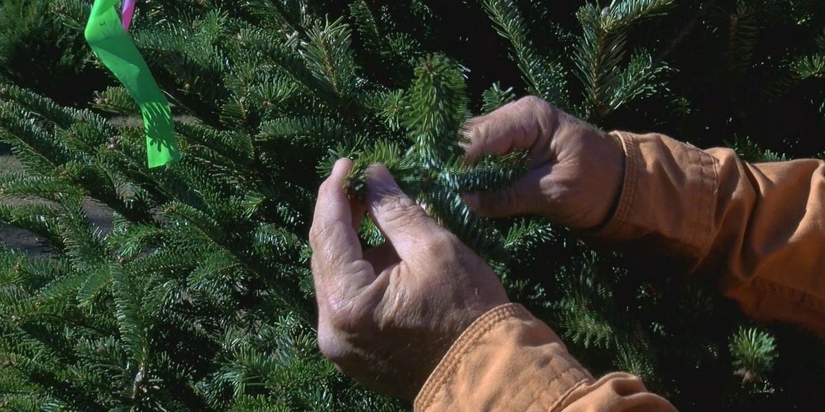Tips to keep your tree healthy through the holiday season