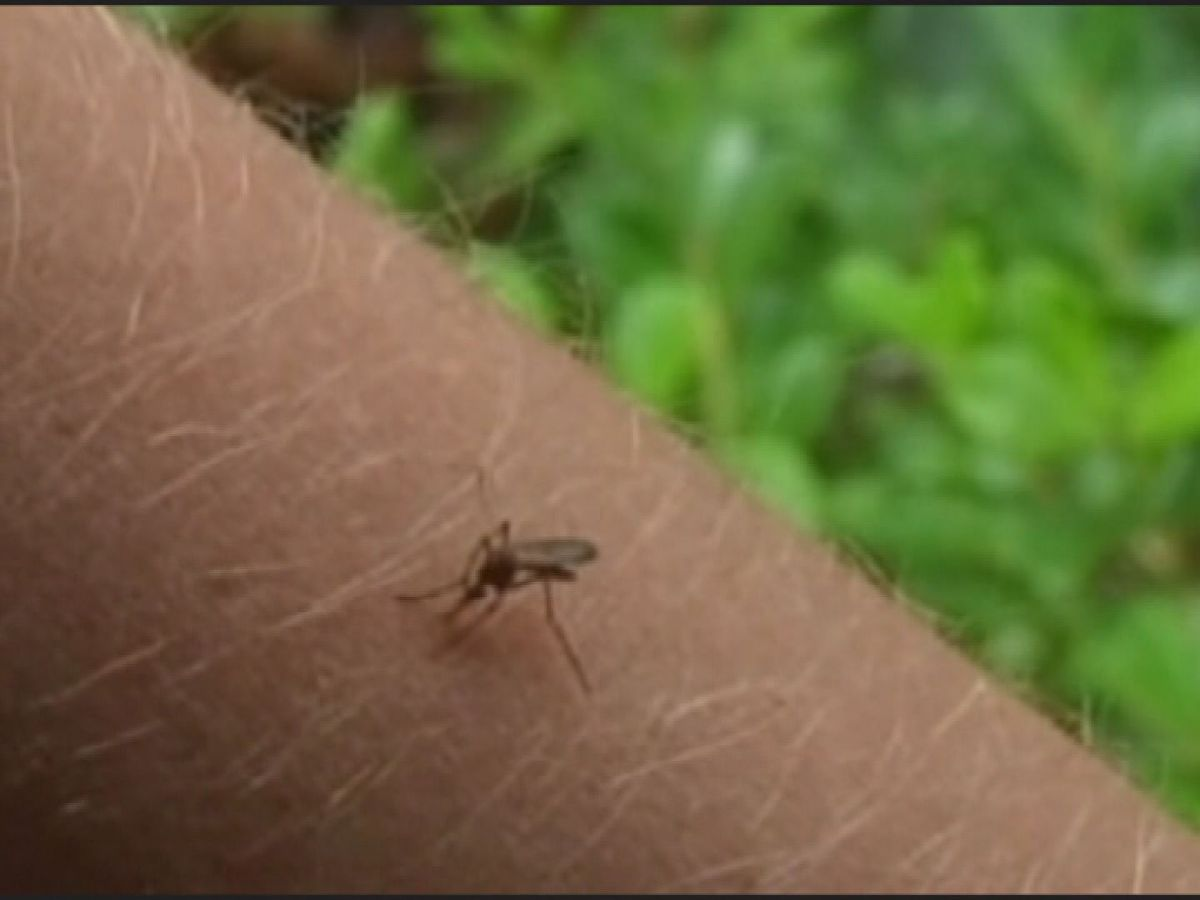 Louisiana reports first human West Nile virus cases for 2019