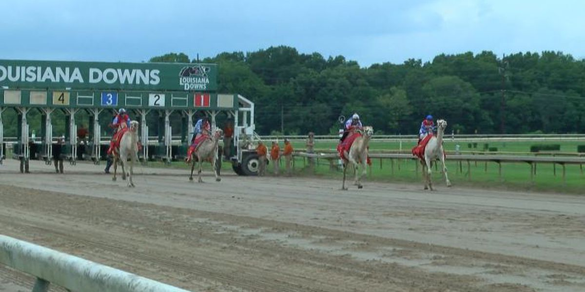 Exotic animals will race at Louisiana Downs for the Fourth of July