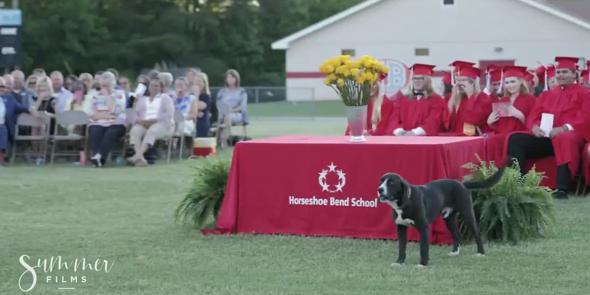 Dog steals the show during speech at Alabama high school graduation (Source: Summer Films)