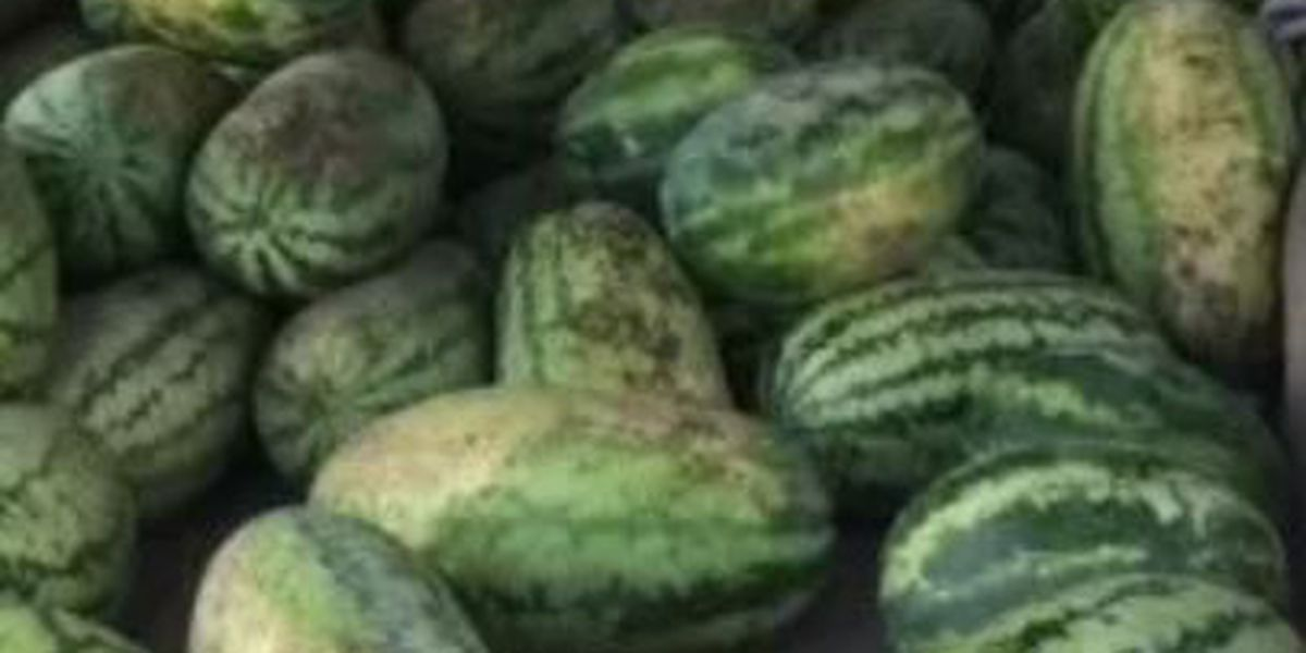 What-A-Melon Festival is this Saturday in Center, TX