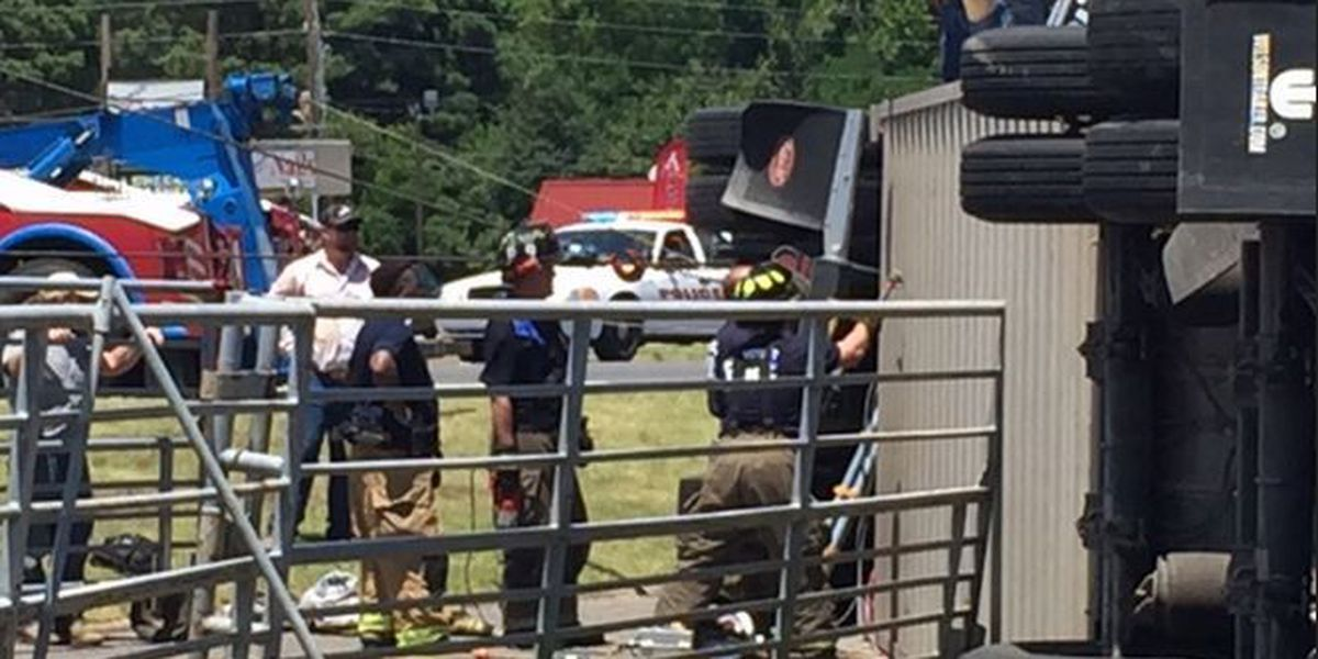 Cattle killed in tractor trailer accident on Mansfield Rd.