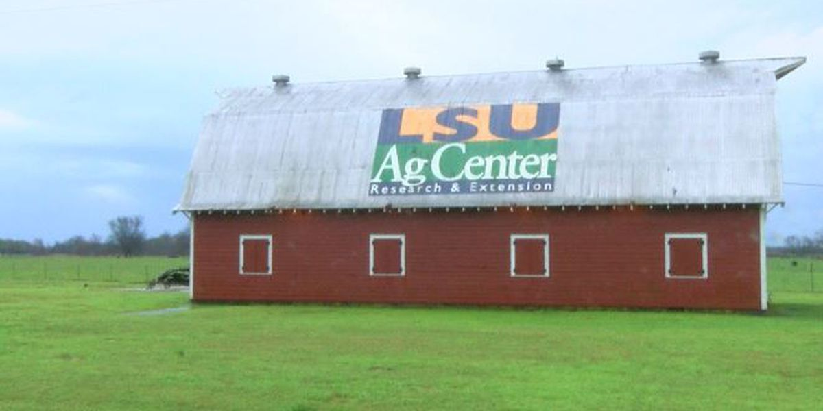 LSU Ag Center weighs in on how flooding impacts farming