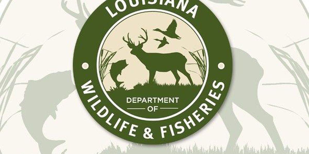 LA Wildlife & Fisheries say Bossier Parish panther sighting 'unlikely'