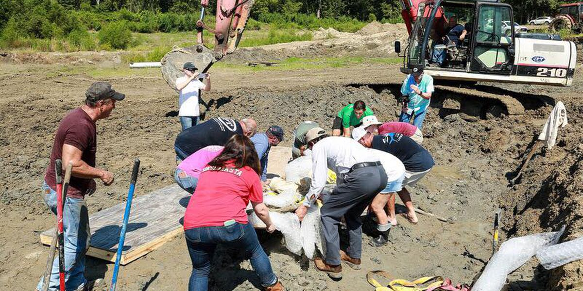 Land excavator discovers ancient Native American canoe in Belle Rose; nearly 1,500 years old