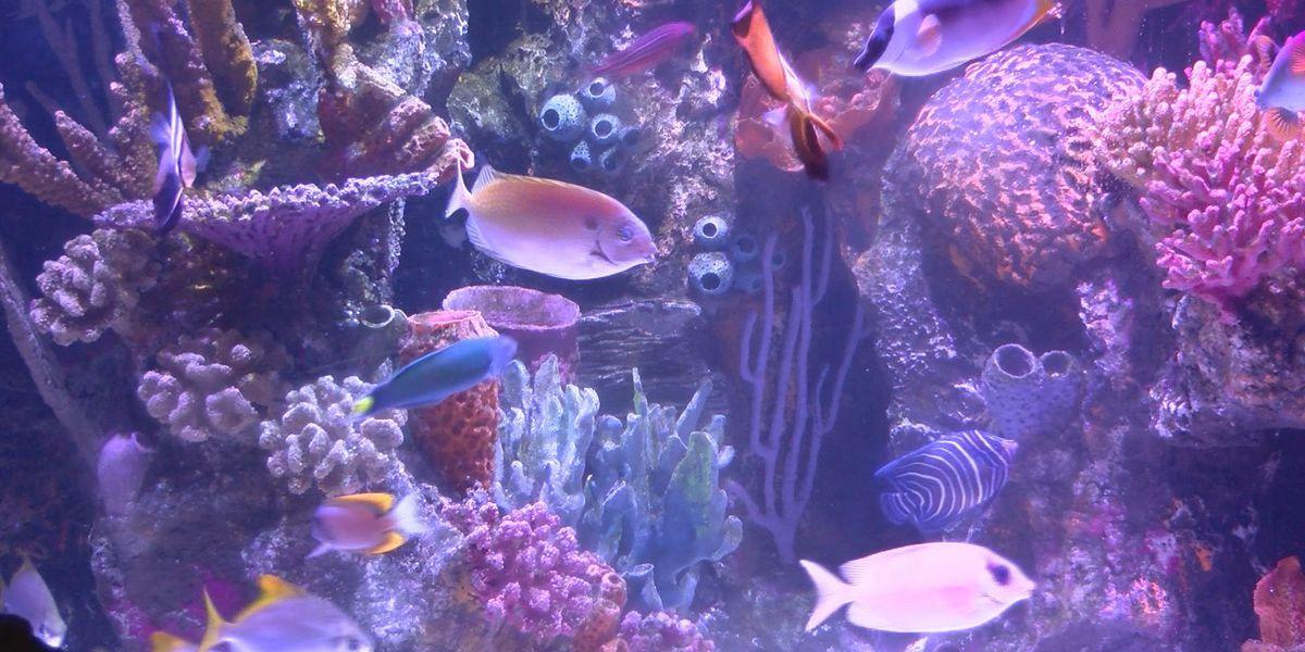 Shreveport Aquarium opens on Monday