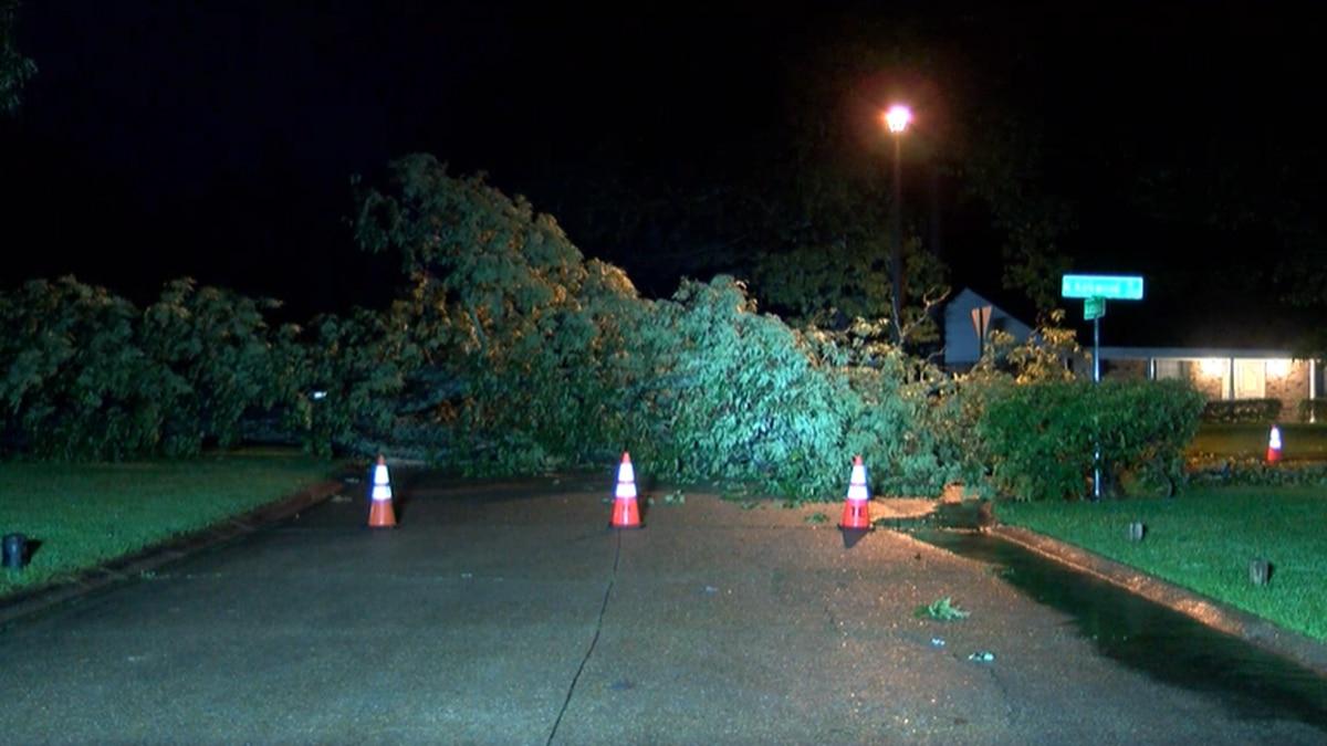 Tree blocks intersection in Southern Hills neighborhood