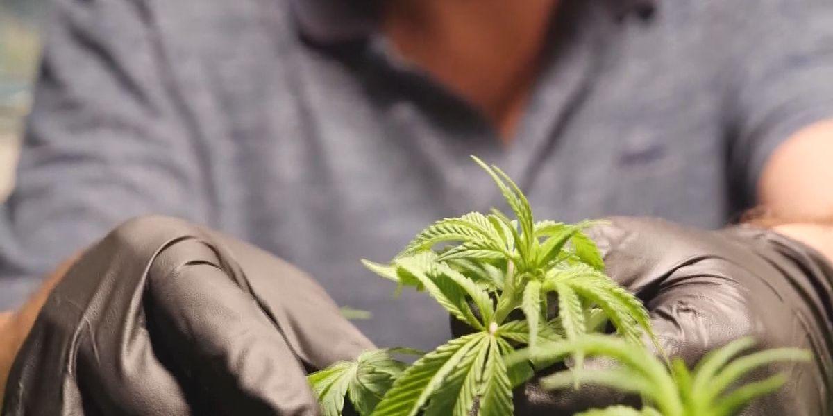 Louisiana officials speak on potential decriminalization of marijuana