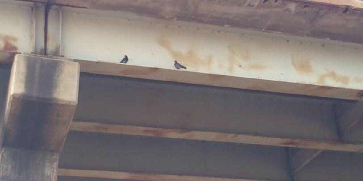 Birds to blame for latest Jimmie Davis Bridge closure delay