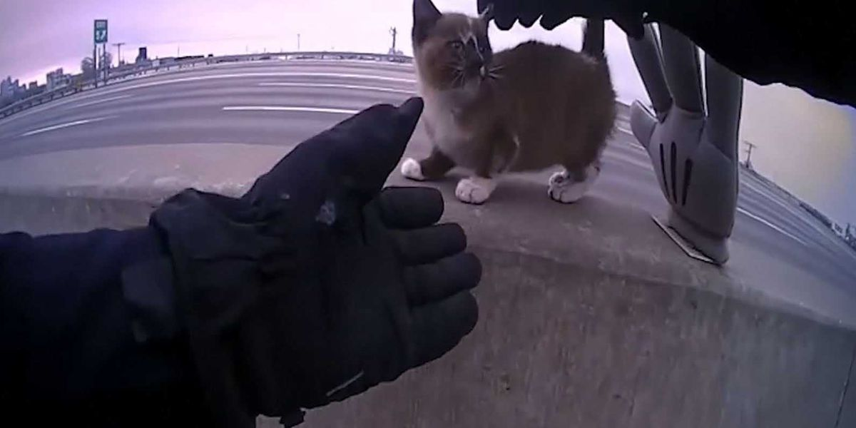 Police officer adopts kitten he rescued from interstate barrier wall