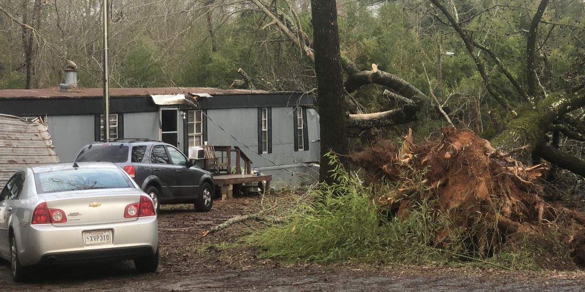 Storm topples massive tree onto Sibley family's home