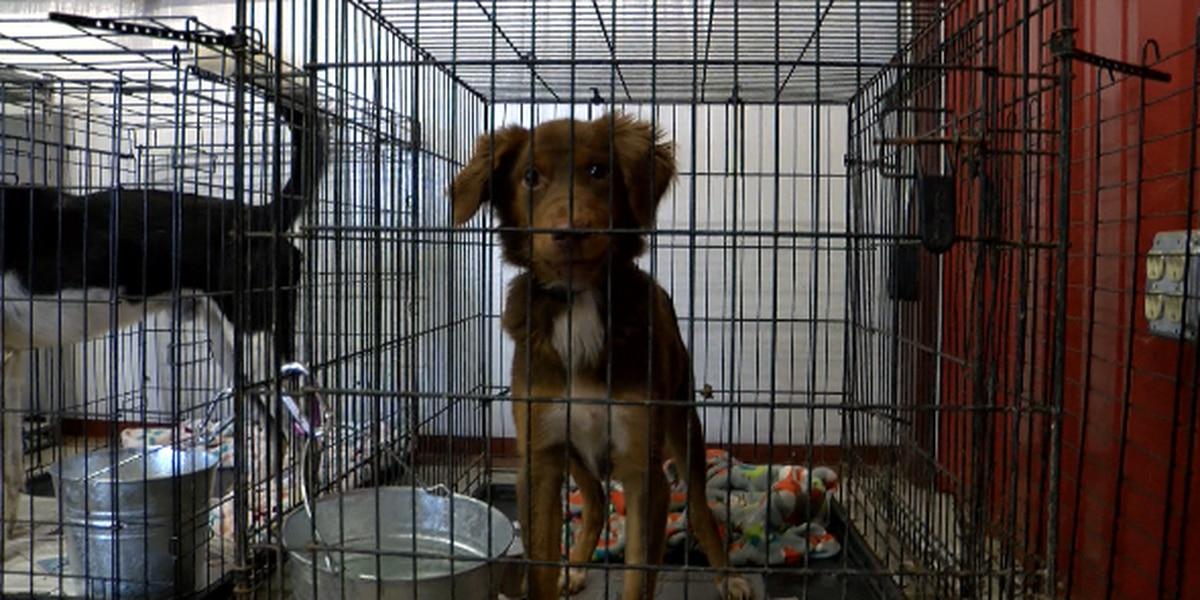 East Texas animal shelter in disrepair desperately seeks volunteers, homes for dogs