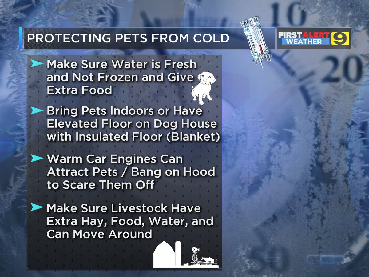 Protect pets and plants during cold weather with these tips