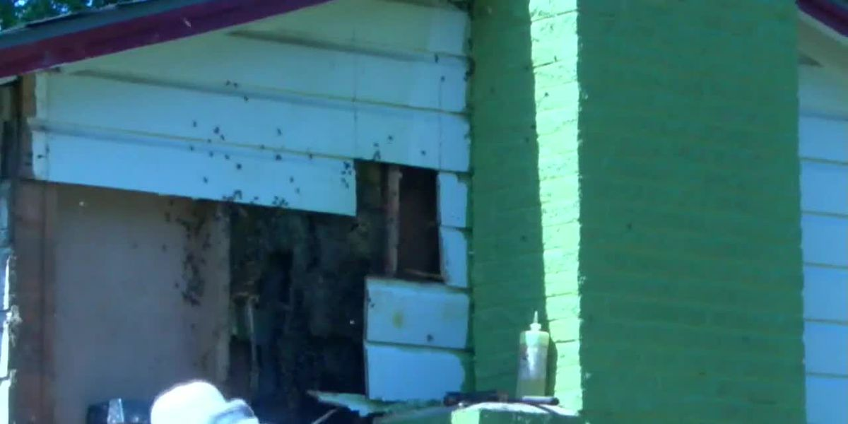 Huge bee colony (and free honey) removed from East Texas woman's home